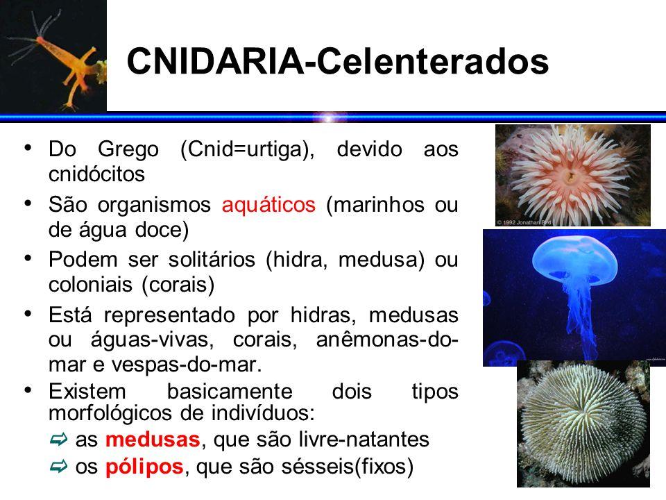 CNIDARIA-Celenterados Do Grego (Cnid=urtiga), devido aos cnidócitos São organismos aquáticos (marinhos ou de água doce) Podem ser solitários (hidra, m