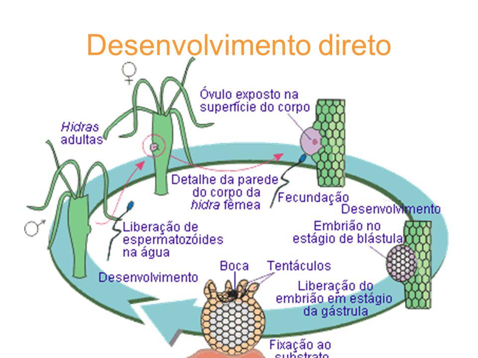 Desenvolvimento direto