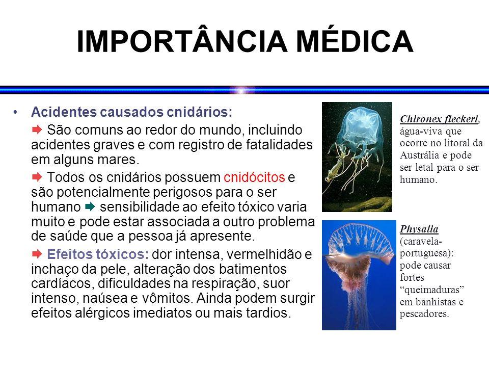 IMPORTÂNCIA MÉDICA Acidentes causados cnidários:  São comuns ao redor do mundo, incluindo acidentes graves e com registro de fatalidades em alguns ma