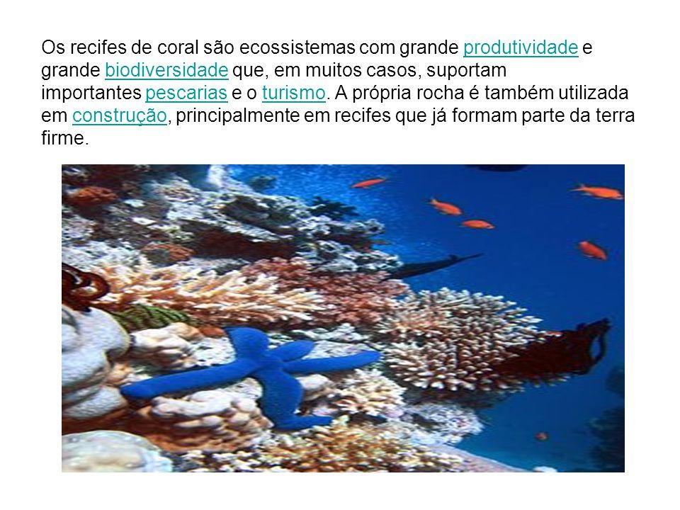 Os recifes de coral são ecossistemas com grande produtividade e grande biodiversidade que, em muitos casos, suportam importantes pescarias e o turismo