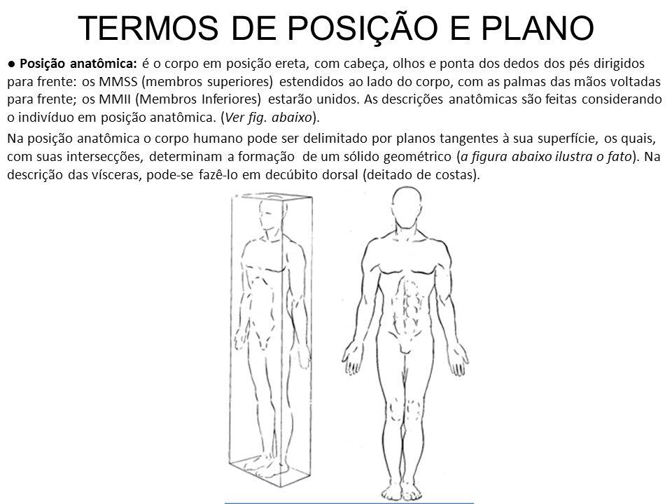 TERMOS DE POSIÇÃO E PLANO ● Posição anatômica: é o corpo em posição ereta, com cabeça, olhos e ponta dos dedos dos pés dirigidos para frente: os MMSS