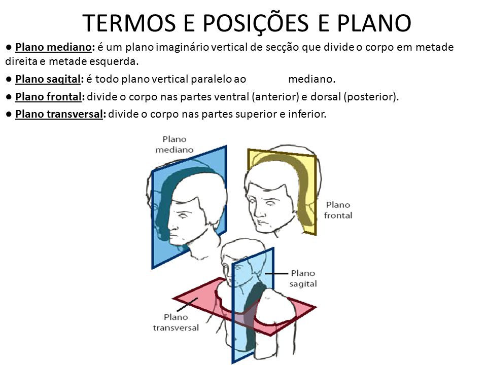 TERMOS E POSIÇÕES E PLANO ● Plano mediano: é um plano imaginário vertical de secção que divide o corpo em metade direita e metade esquerda. ● Plano sa