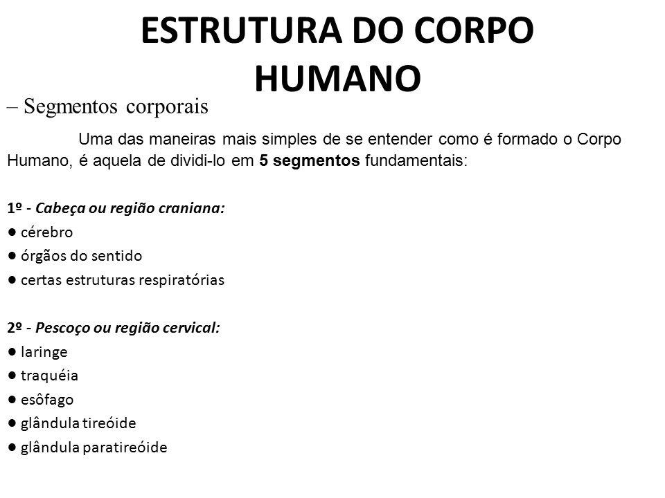 ESTRUTURA DO CORPO HUMANO – Segmentos corporais Uma das maneiras mais simples de se entender como é formado o Corpo Humano, é aquela de dividi ‑ lo em
