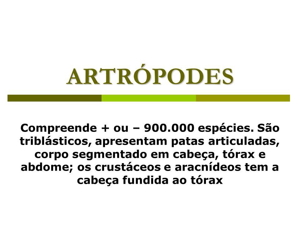 ARTRÓPODES Compreende + ou – 900.000 espécies. São triblásticos, apresentam patas articuladas, corpo segmentado em cabeça, tórax e abdome; os crustáce