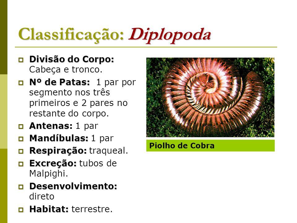 Classificação: Diplopoda  Divisão do Corpo:  Divisão do Corpo: Cabeça e tronco.  Nº de Patas:  Nº de Patas: 1 par por segmento nos três primeiros