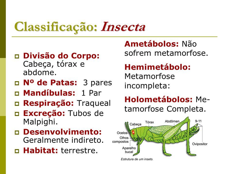 Classificação: Insecta  Divisão do Corpo: Cabeça, tórax e abdome.  Nº de Patas: 3 pares  Mandíbulas: 1 Par  Respiração: Traqueal  Excreção: Tubos