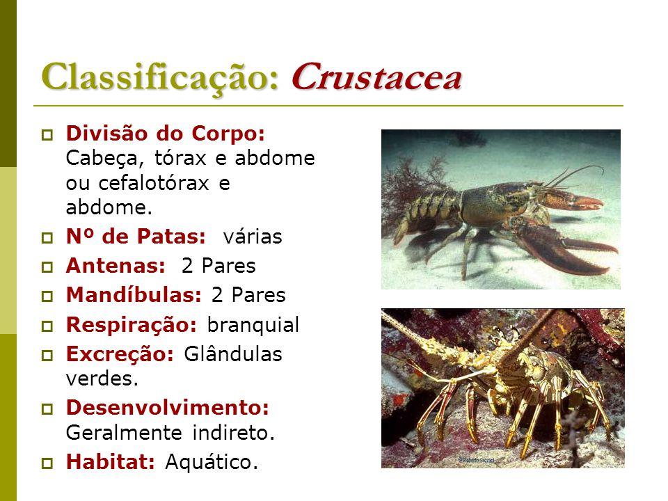 Classificação: Crustacea  Divisão do Corpo: Cabeça, tórax e abdome ou cefalotórax e abdome.  Nº de Patas: várias  Antenas: 2 Pares  Mandíbulas: 2
