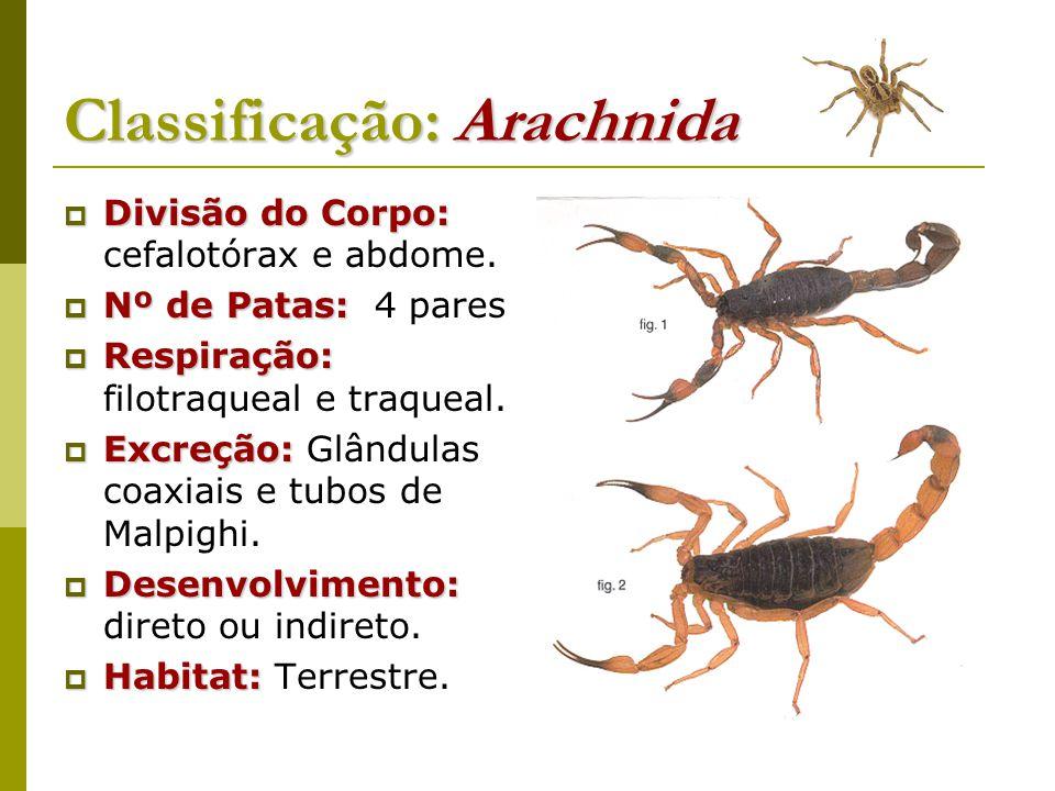 Classificação: Arachnida  Divisão do Corpo:  Divisão do Corpo: cefalotórax e abdome.  Nº de Patas:  Nº de Patas: 4 pares  Respiração:  Respiraçã