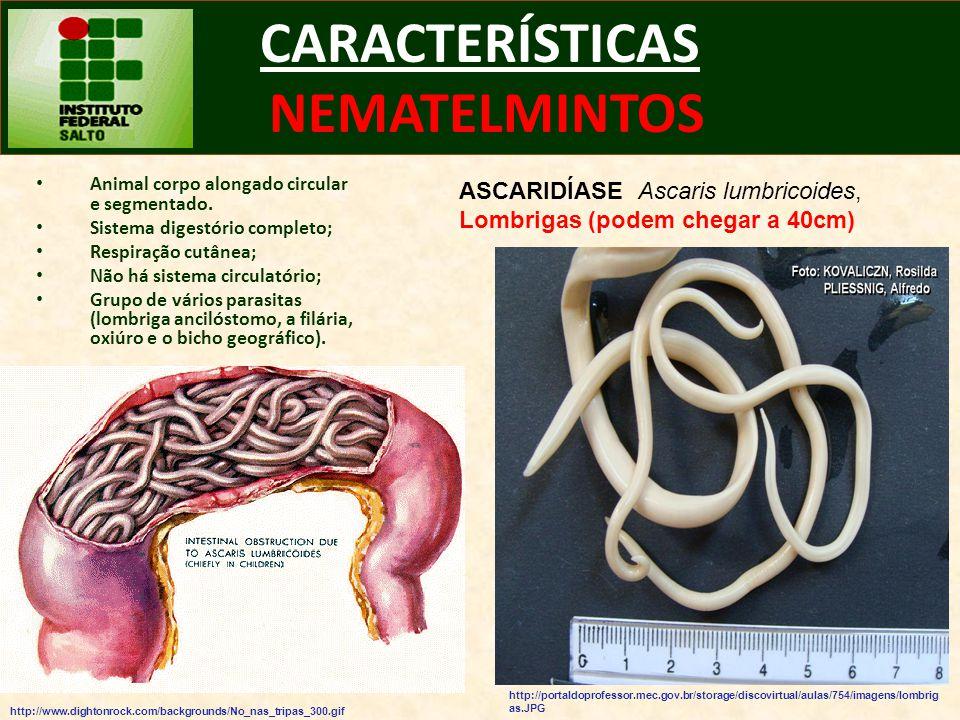CARACTERÍSTICAS NEMATELMINTOS Animal corpo alongado circular e segmentado. Sistema digestório completo; Respiração cutânea; Não há sistema circulatóri