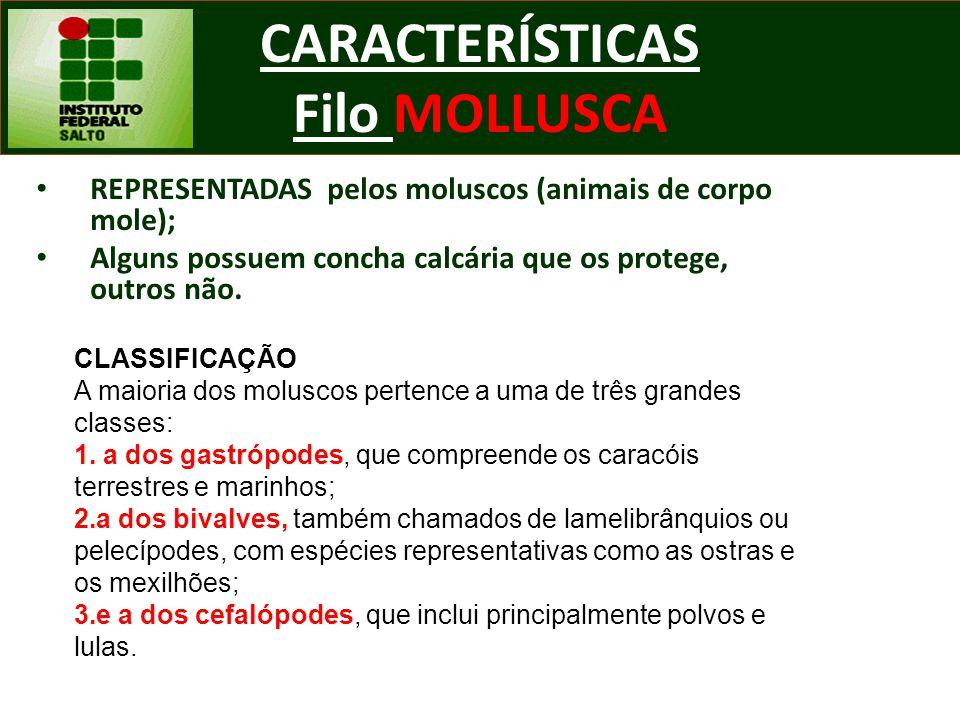 CARACTERÍSTICAS Filo MOLLUSCA REPRESENTADAS pelos moluscos (animais de corpo mole); Alguns possuem concha calcária que os protege, outros não. CLASSIF