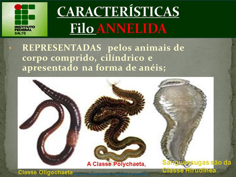 REPRESENTADAS pelos animais de corpo comprido, cilíndrico e apresentado na forma de anéis; A Classe Polychaeta, Sanguessugas são da Classe Hirudínea C
