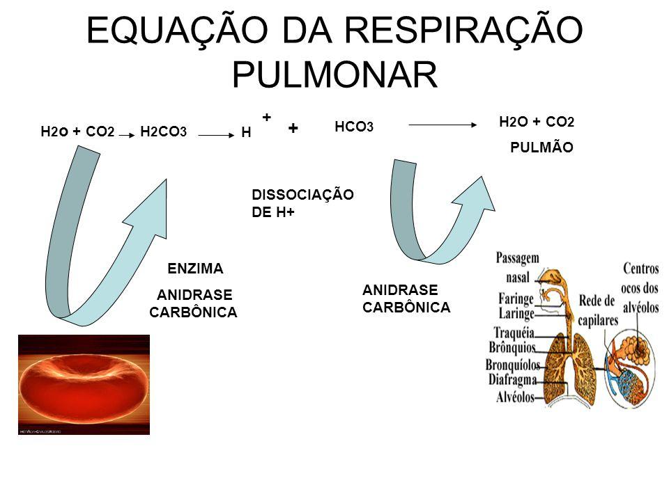 EQUAÇÃO DA RESPIRAÇÃO PULMONAR H 2 o + CO 2 H 2 CO 3 ENZIMA ANIDRASE CARBÔNICA H + + HCO 3 DISSOCIAÇÃO DE H+ ANIDRASE CARBÔNICA H 2 O + CO 2 PULMÃO