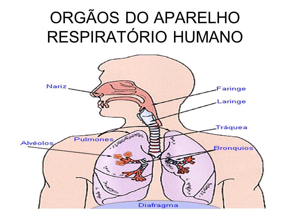 ORGÃOS DO APARELHO RESPIRATÓRIO HUMANO