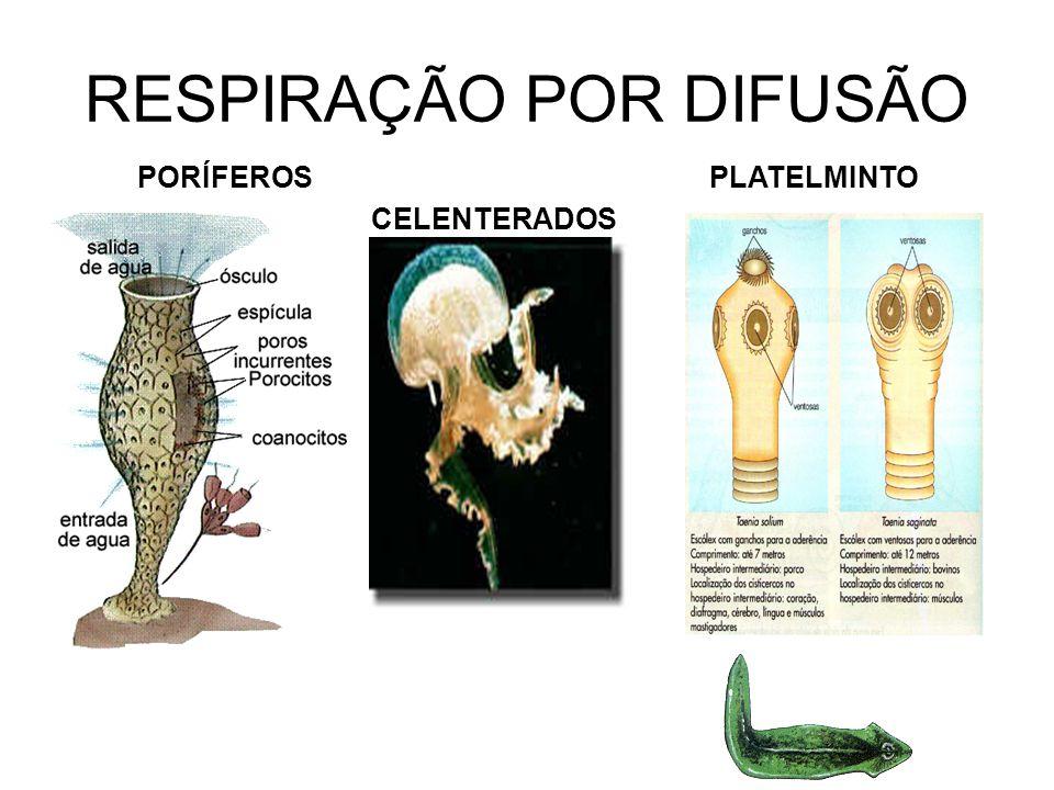 RESPIRAÇÃO POR DIFUSÃO PORÍFEROS CELENTERADOS PLATELMINTO