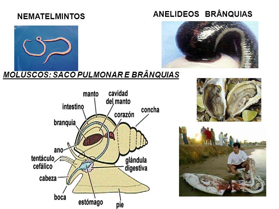 NEMATELMINTOS ANELIDEOS BRÂNQUIAS MOLUSCOS: SACO PULMONAR E BRÂNQUIAS