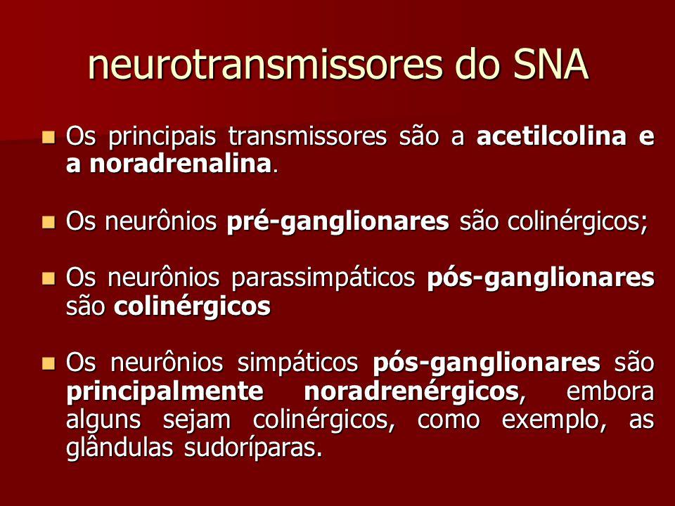 neurotransmissores do SNA Os principais transmissores são a acetilcolina e a noradrenalina. Os principais transmissores são a acetilcolina e a noradre