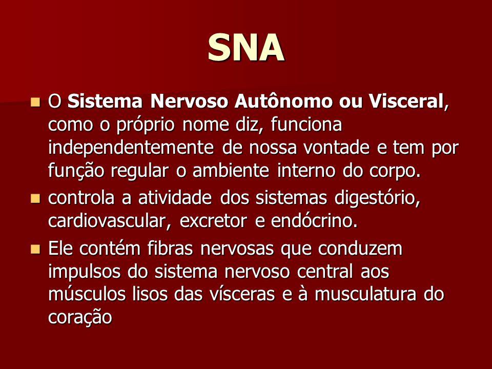 SNA O Sistema Nervoso Autônomo ou Visceral, como o próprio nome diz, funciona independentemente de nossa vontade e tem por função regular o ambiente i