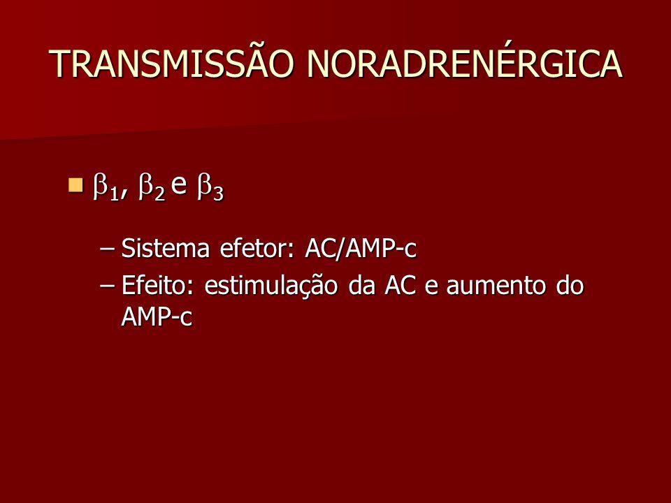 TRANSMISSÃO NORADRENÉRGICA  1,  2 e  3  1,  2 e  3 –Sistema efetor: AC/AMP-c –Efeito: estimulação da AC e aumento do AMP-c