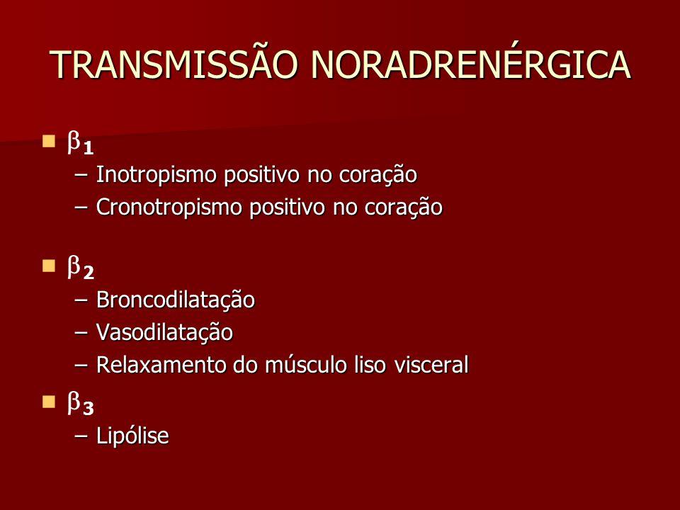 TRANSMISSÃO NORADRENÉRGICA  1 –Inotropismo positivo no coração –Cronotropismo positivo no coração  2 –Broncodilatação –Vasodilatação –Relaxamento do