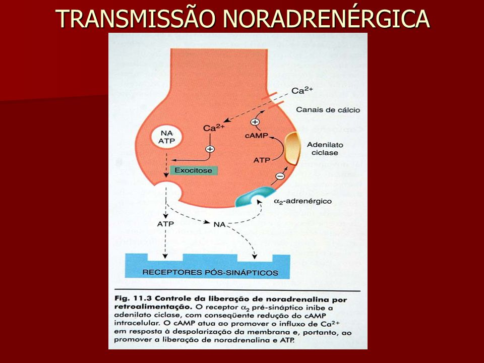 TRANSMISSÃO NORADRENÉRGICA