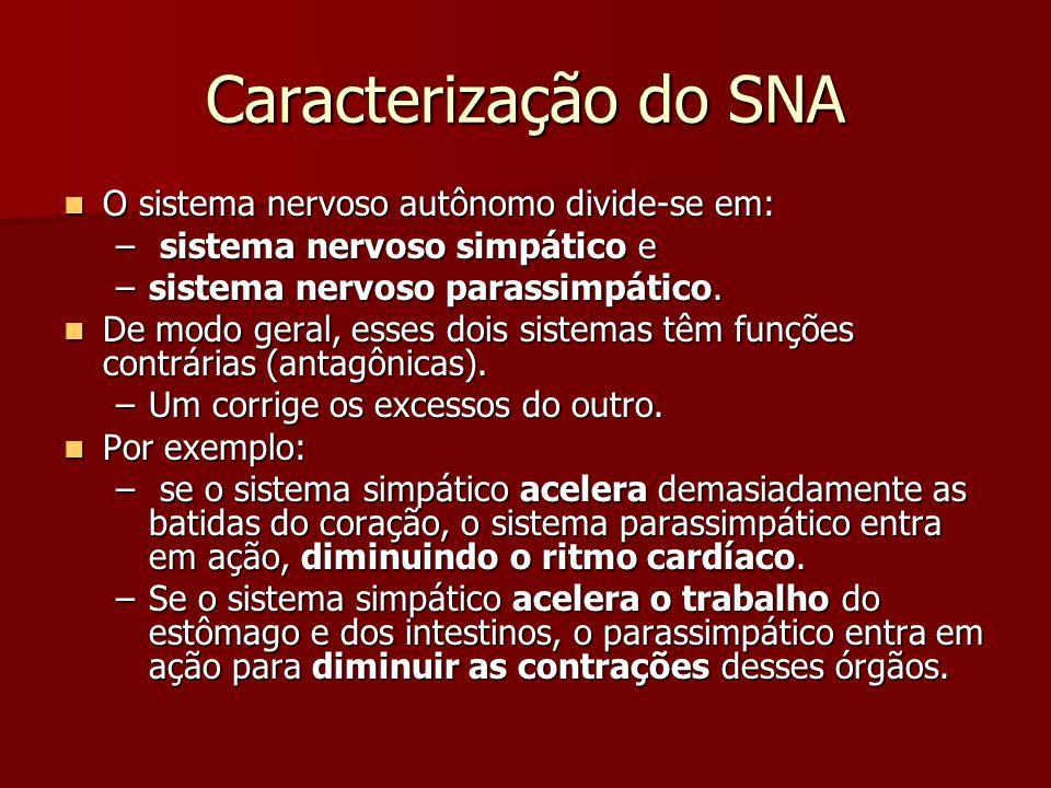 Caracterização do SNA O sistema nervoso autônomo divide-se em: O sistema nervoso autônomo divide-se em: – sistema nervoso simpático e –sistema nervoso