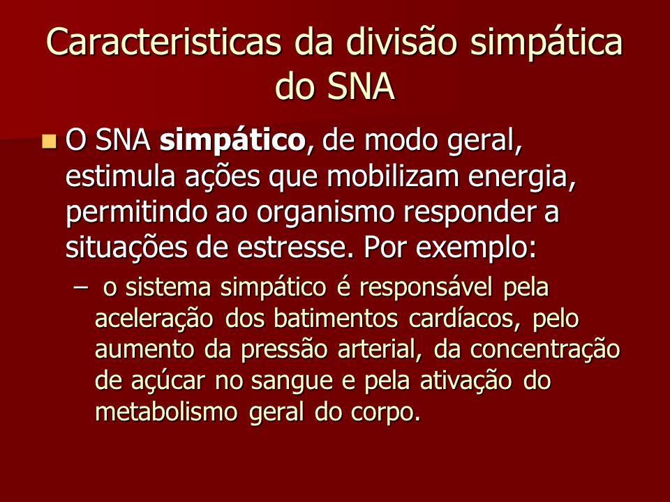 Caracteristicas da divisão simpática do SNA O SNA simpático, de modo geral, estimula ações que mobilizam energia, permitindo ao organismo responder a