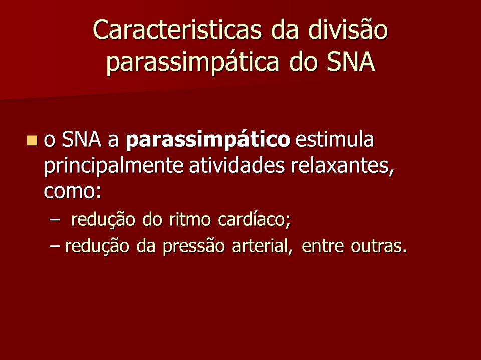 Caracteristicas da divisão parassimpática do SNA o SNA a parassimpático estimula principalmente atividades relaxantes, como: o SNA a parassimpático es