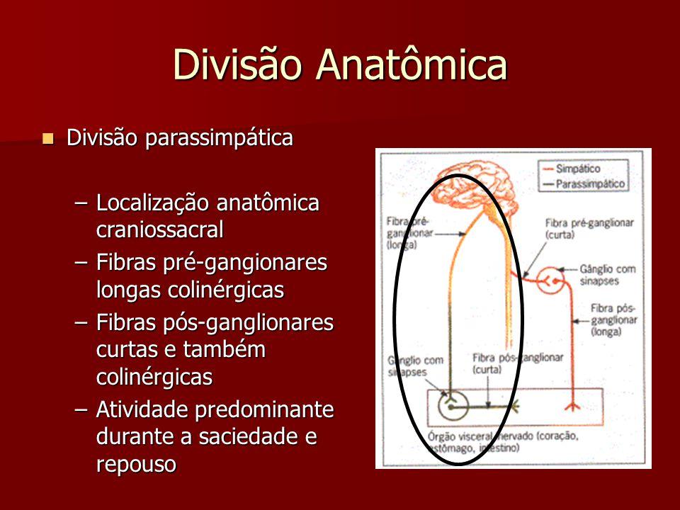 Divisão Anatômica Divisão parassimpática Divisão parassimpática –Localização anatômica craniossacral –Fibras pré-gangionares longas colinérgicas –Fibr