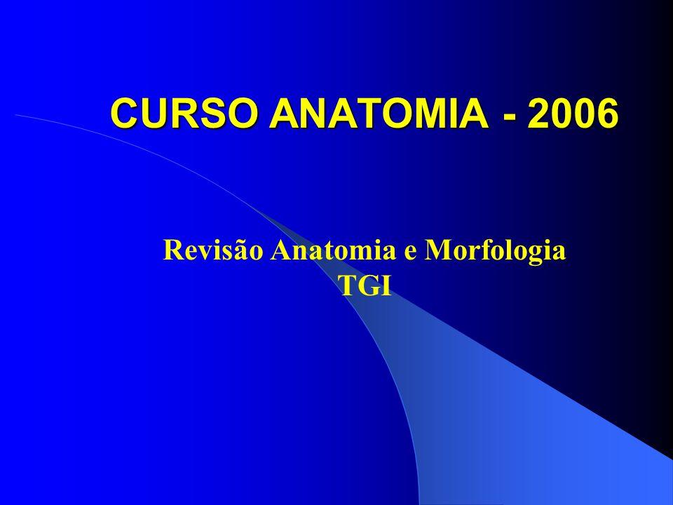 CURSO ANATOMIA - 2006 Revisão Anatomia e Morfologia TGI
