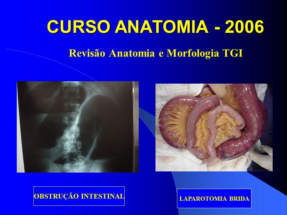 CURSO ANATOMIA - 2006 Revisão Anatomia e Morfologia TGI OBSTRUÇÃO INTESTINAL LAPAROTOMIA BRIDA