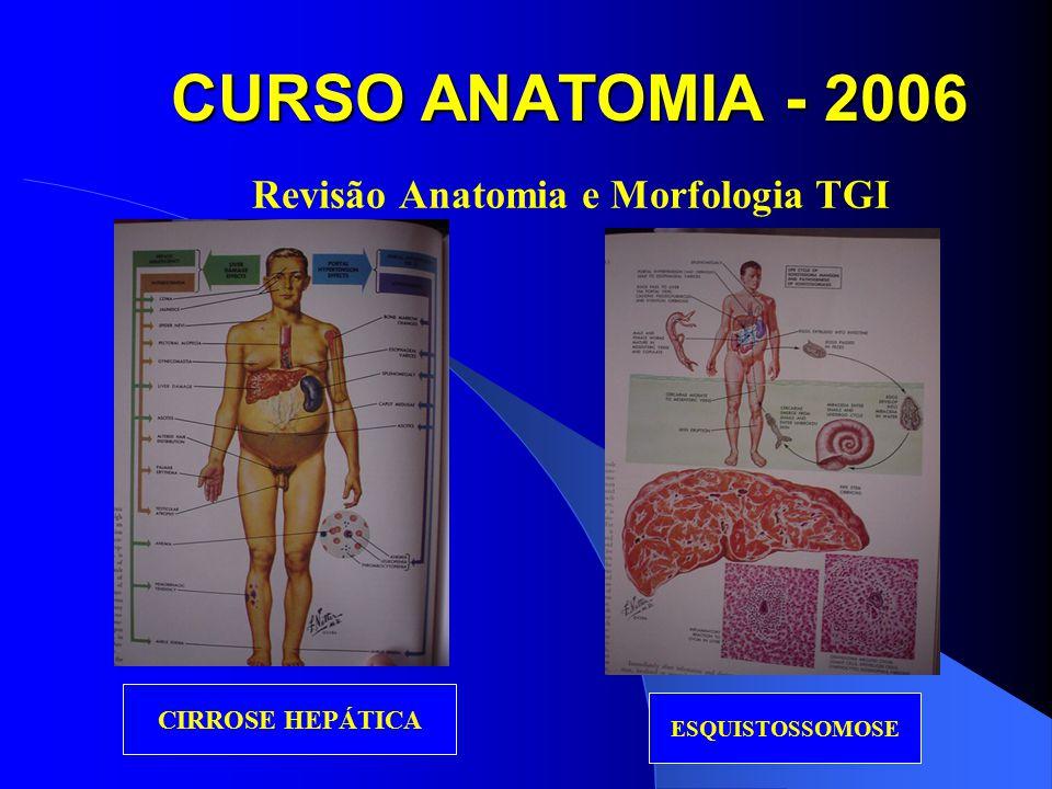 CURSO ANATOMIA - 2006 Revisão Anatomia e Morfologia TGI CIRROSE HEPÁTICA ESQUISTOSSOMOSE