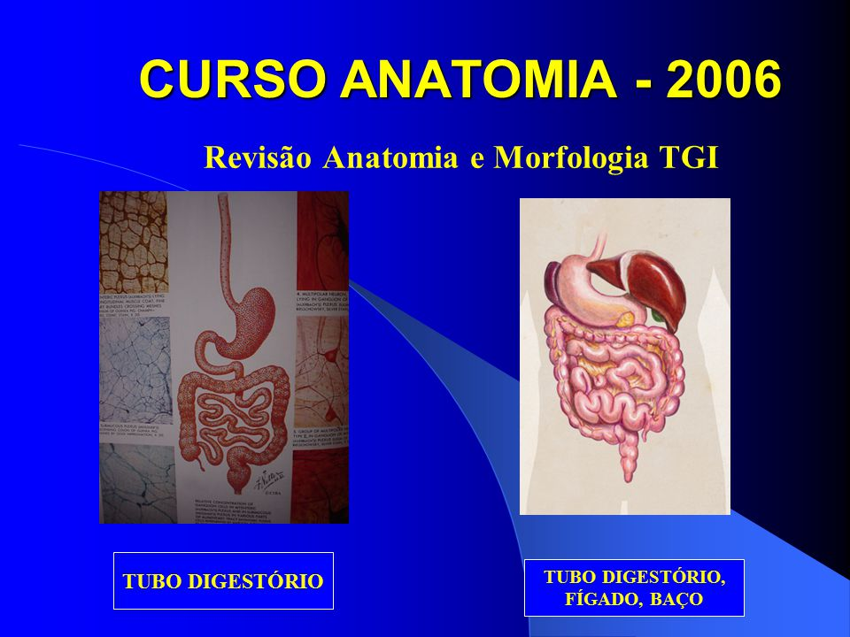 CURSO ANATOMIA - 2006 Revisão Anatomia e Morfologia TGI PANCREATITE CRÔNICA NEOPLASIA PÂNCREAS