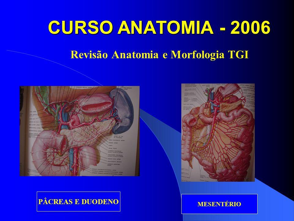 CURSO ANATOMIA - 2006 Revisão Anatomia e Morfologia TGI COLON RETO