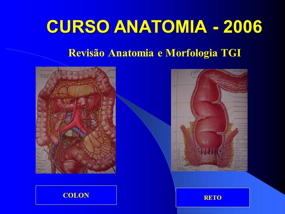 CURSO ANATOMIA - 2006 Revisão Anatomia e Morfologia TGI DOENÇA DIVERTICULAR COLOSTOMIA