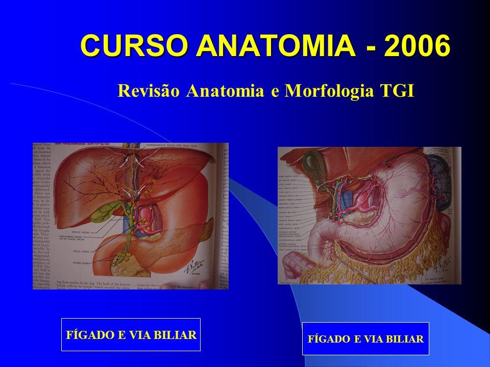 CURSO ANATOMIA - 2006 Revisão Anatomia e Morfologia TGI FÍGADO E VIA BILIAR