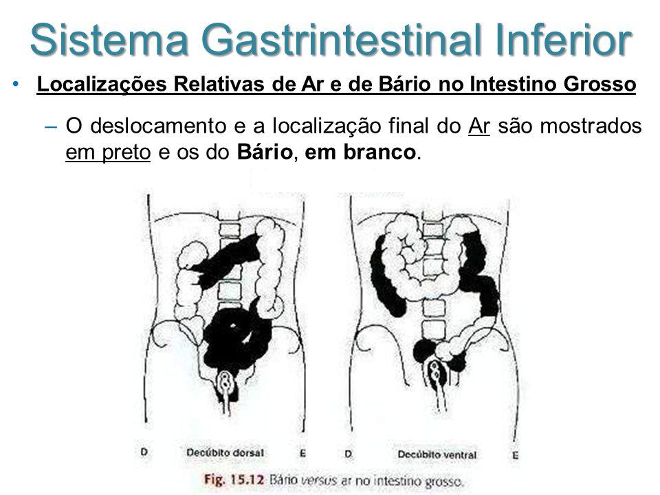 Sistema Gastrintestinal Inferior Localizações Relativas de Ar e de Bário no Intestino Grosso –O deslocamento e a localização final do Ar são mostrados