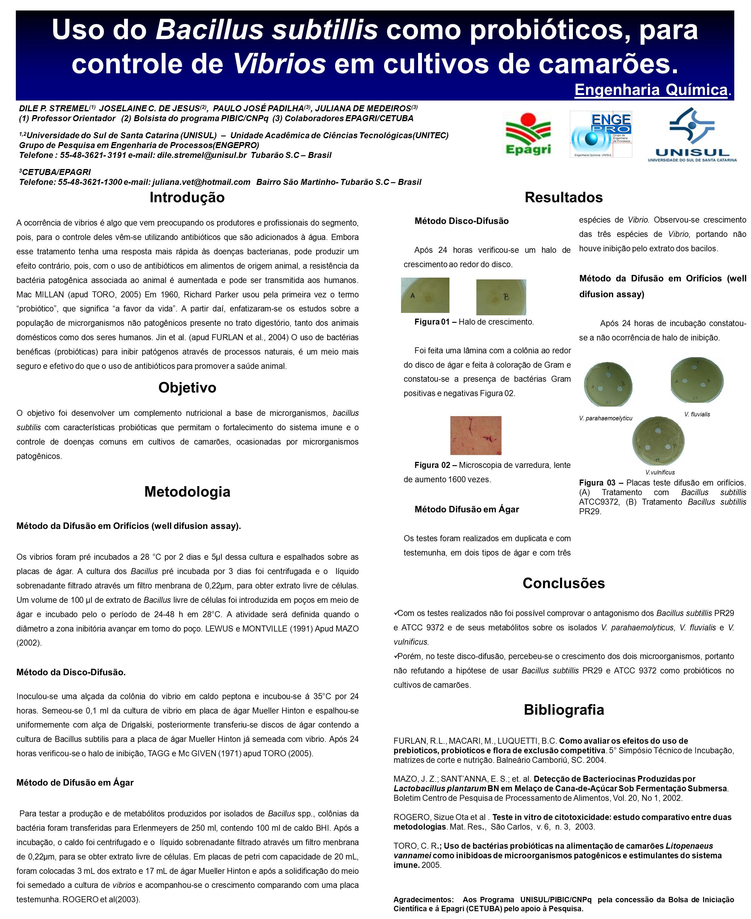 Uso do Bacillus subtillis como probióticos, para controle de Vibrios em cultivos de camarões. Engenharia Química. Introdução A ocorrência de vibrios é