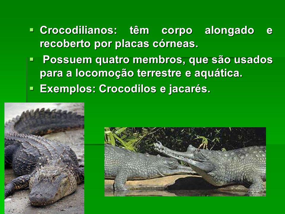  Crocodilianos: têm corpo alongado e recoberto por placas córneas.  Possuem quatro membros, que são usados para a locomoção terrestre e aquática. 