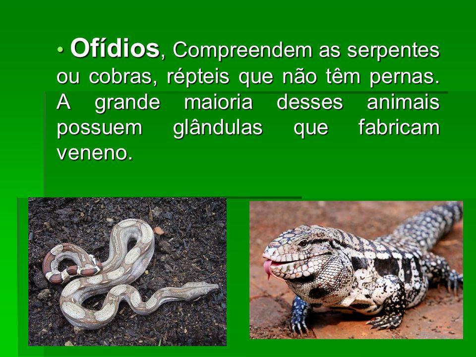 Ofídios, Compreendem as serpentes ou cobras, répteis que não têm pernas. A grande maioria desses animais possuem glândulas que fabricam veneno. Ofídio