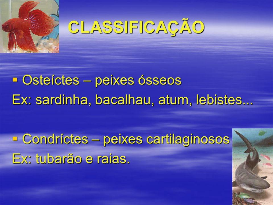 CLASSIFICAÇÃO  Osteíctes – peixes ósseos Ex: sardinha, bacalhau, atum, lebistes...  Condríctes – peixes cartilaginosos Ex: tubarão e raias.