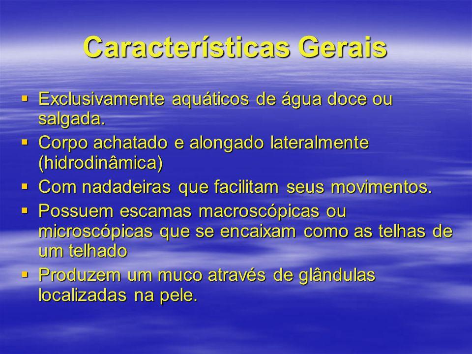Características Gerais  Exclusivamente aquáticos de água doce ou salgada.  Corpo achatado e alongado lateralmente (hidrodinâmica)  Com nadadeiras q