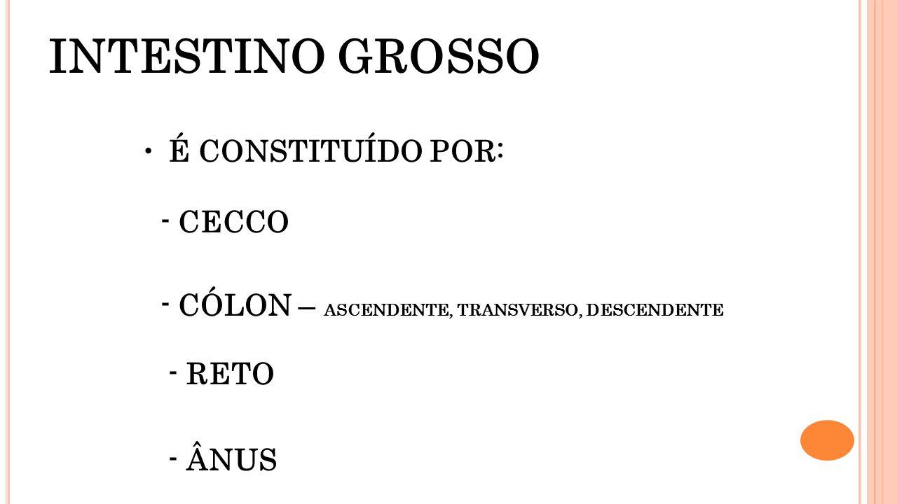 INTESTINO GROSSO É CONSTITUÍDO POR: - CECCO - CÓLON – ASCENDENTE, TRANSVERSO, DESCENDENTE - RETO - ÂNUS