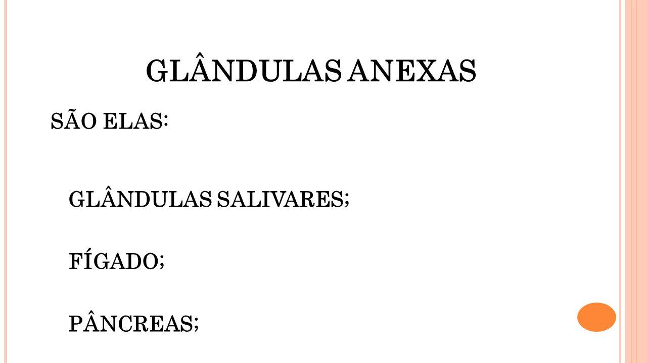 GLÂNDULAS ANEXAS SÃO ELAS: GLÂNDULAS SALIVARES; FÍGADO; PÂNCREAS;
