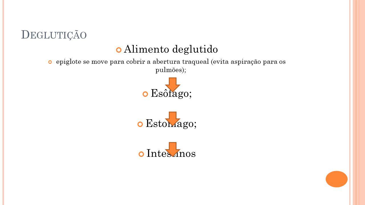 D EGLUTIÇÃO Alimento deglutido epiglote se move para cobrir a abertura traqueal (evita aspiração para os pulmões); Esôfago; Estomago; Intestinos