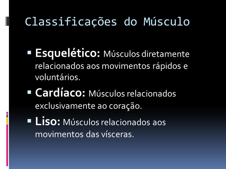 Classificações do Músculo  Esquelético: Músculos diretamente relacionados aos movimentos rápidos e voluntários.  Cardíaco: Músculos relacionados exc