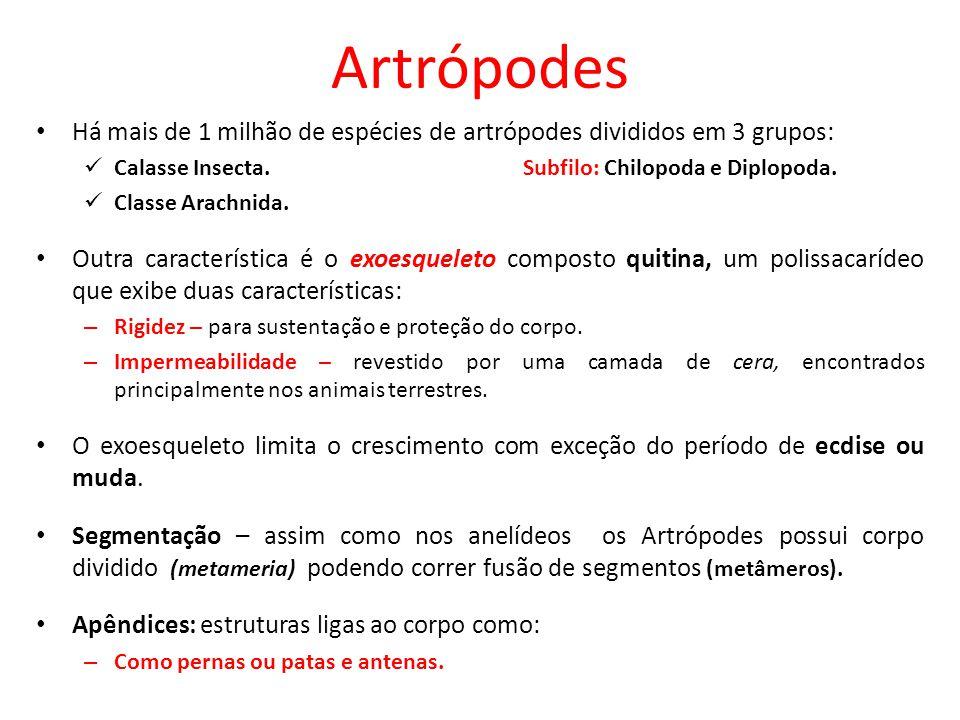 Artrópodes Há mais de 1 milhão de espécies de artrópodes divididos em 3 grupos: Calasse Insecta. Subfilo: Chilopoda e Diplopoda. Classe Arachnida. Out