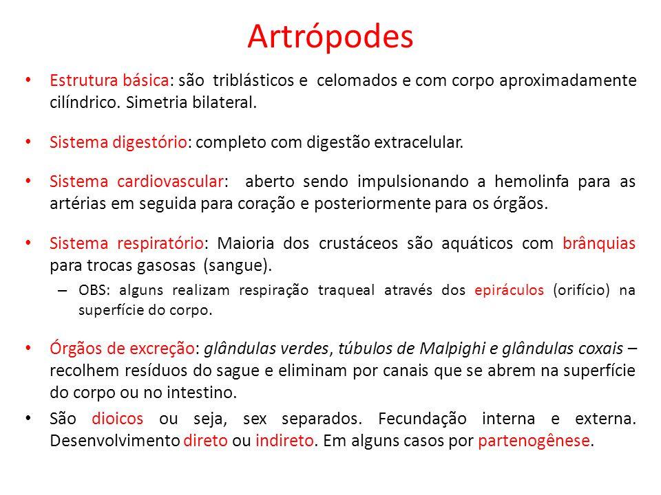 Artrópodes Estrutura básica: são triblásticos e celomados e com corpo aproximadamente cilíndrico. Simetria bilateral. Sistema digestório: completo com