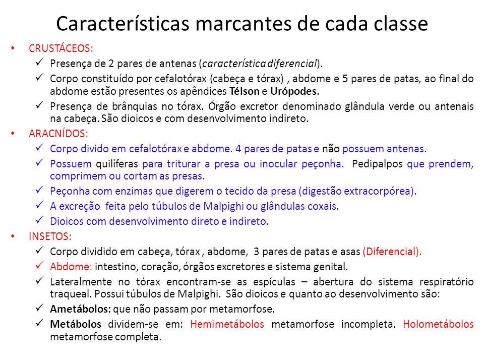 Características marcantes de cada classe CRUSTÁCEOS: Presença de 2 pares de antenas (característica diferencial). Corpo constituído por cefalotórax (c
