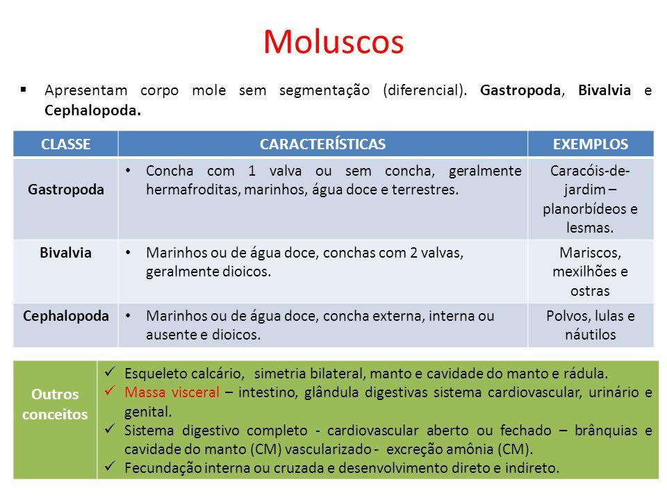 Moluscos  Apresentam corpo mole sem segmentação (diferencial). Gastropoda, Bivalvia e Cephalopoda. CLASSECARACTERÍSTICASEXEMPLOS Gastropoda Concha co