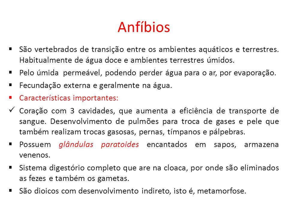 Anfíbios  São vertebrados de transição entre os ambientes aquáticos e terrestres. Habitualmente de água doce e ambientes terrestres úmidos.  Pelo úm
